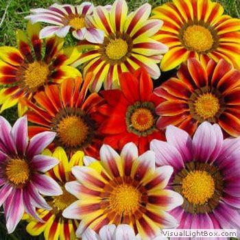 Mevsimlik Bitkiler