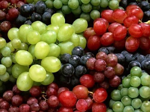 Çalı ve Yayılıcı Meyveler